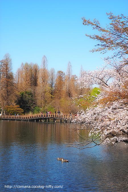 190404_inokashira_1_1