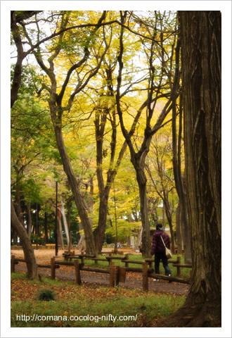 091114_inokashira