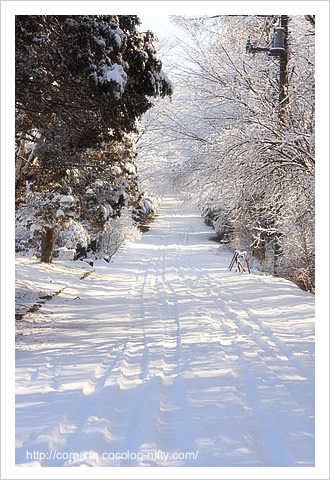 091207_snow_3