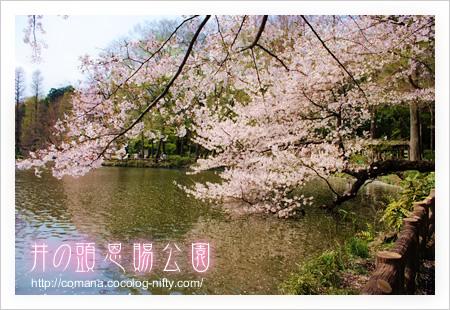 100406_inokashira_1_2