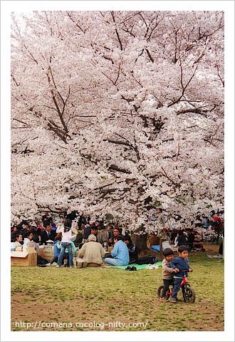 110410_inokashira_1
