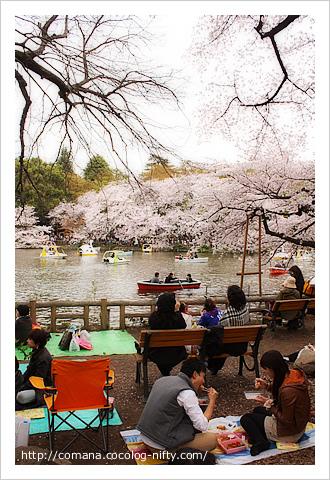 110410_inokashira_4