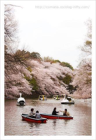 110410_inokashira_7