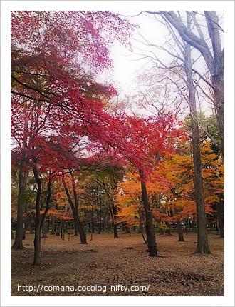 111208_onishi_5