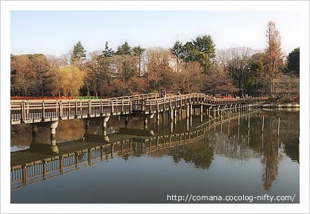 140122_inokashira_1