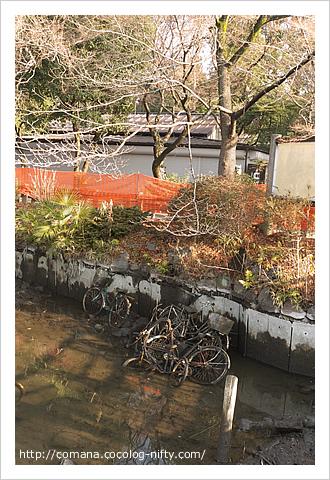 140122_inokashira_4