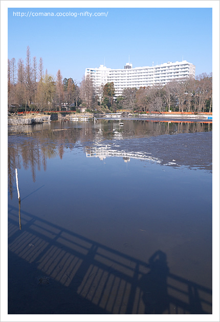 140302_inokashira_1