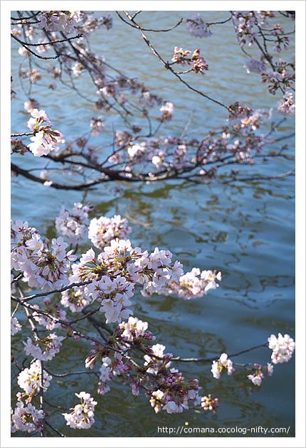 140331_inokashira_2