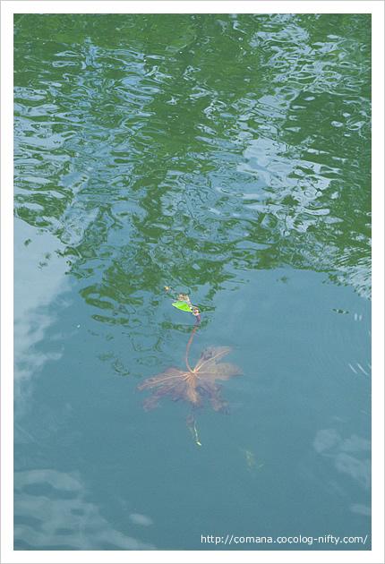 井の頭池の透明度