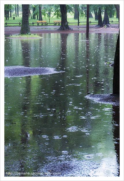 大雨の井の頭公園