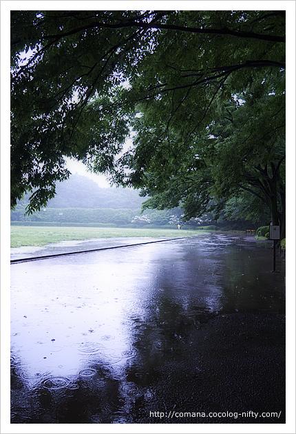 雨のトラック
