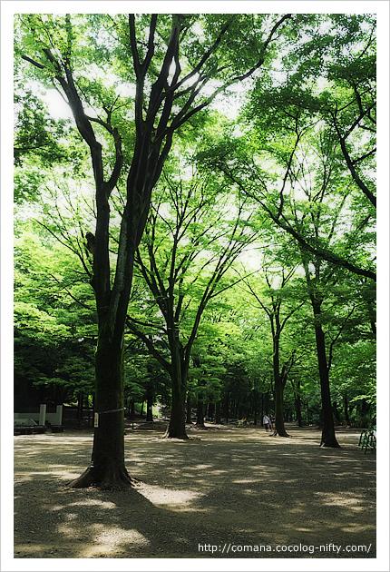 井の頭公園の緑がきれい!