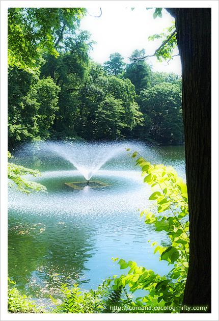 井の頭池の噴水