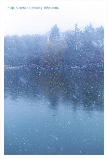 雪の井の頭池