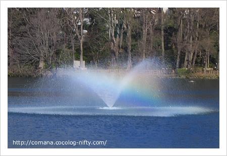 井の頭池の噴水にかかる虹