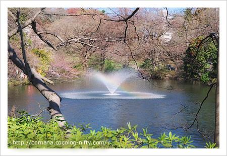 弁天池の噴水に虹