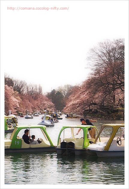 ボートの渋滞