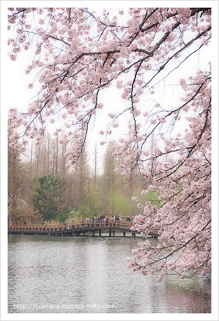 七井橋遠景
