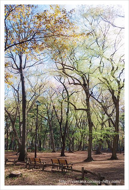 萌黄色の木々