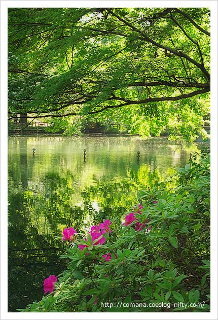 初夏の井の頭公園