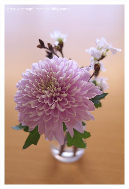 七日のお花