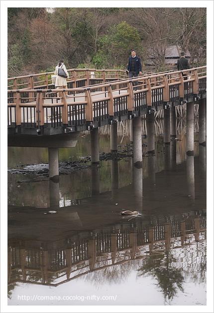 七井橋とカモ
