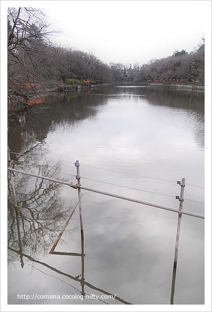 水が戻った井の頭池