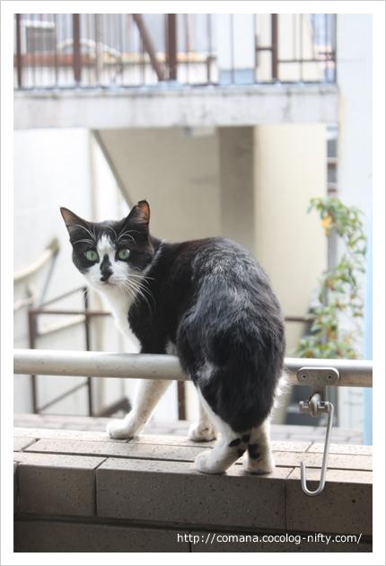 謎のネコ写真