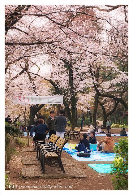 桜とともにやってきた!