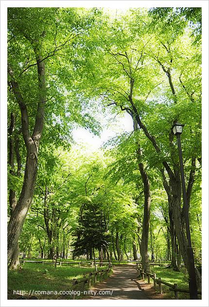 井の頭公園の新緑がきれい