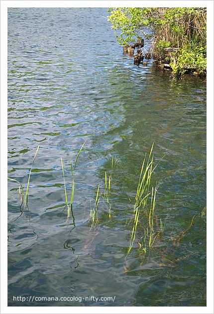 井の頭池の水面