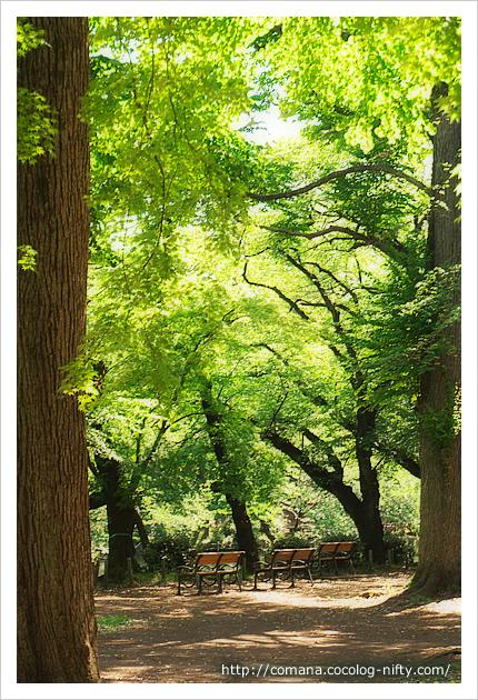 緑の中の思い出ベンチ