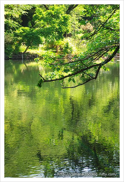 水面にも緑