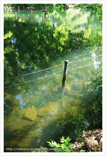 池の底が見える