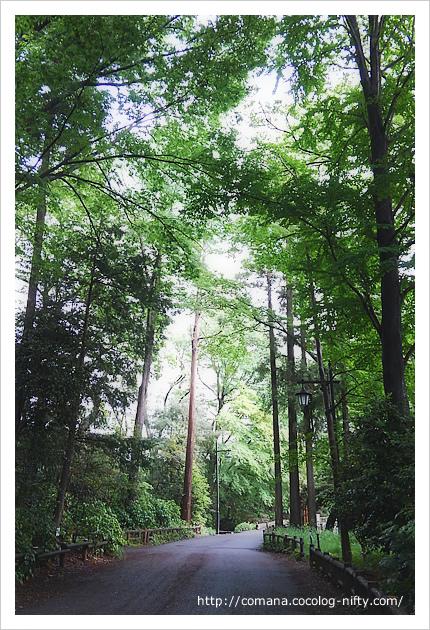 井の頭公園は杉の名所だったという話