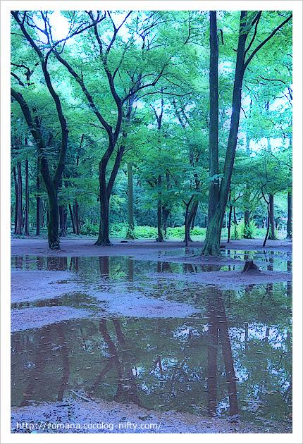 雨上がりの井の頭公園