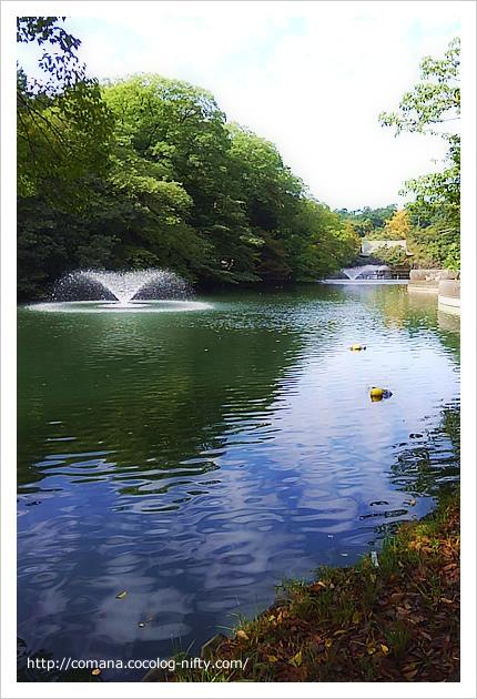 今朝の井の頭公園