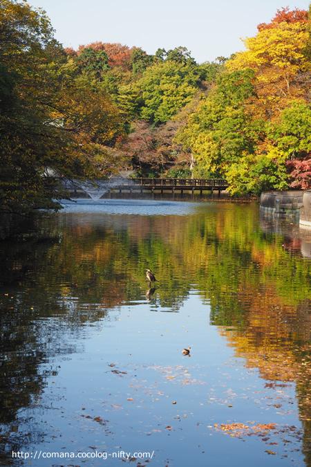 続・井の頭公園の紅葉が急に進んだ気がする(2016)