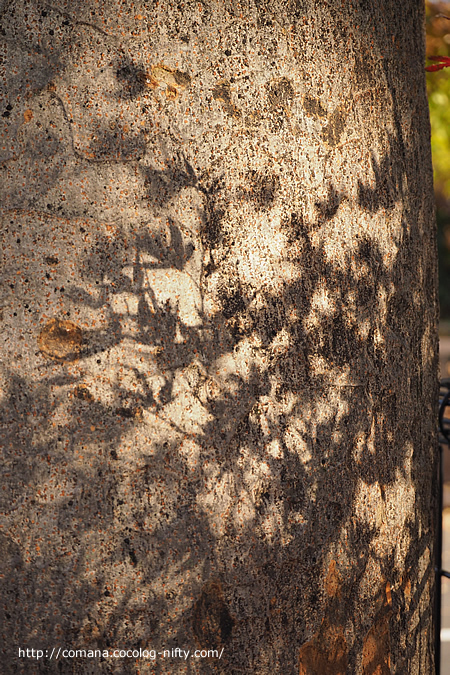 木の幹に映ったモミジの影