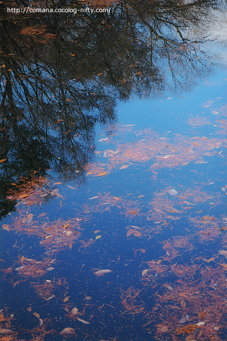 井の頭公園の紅葉もそろそろ見納め