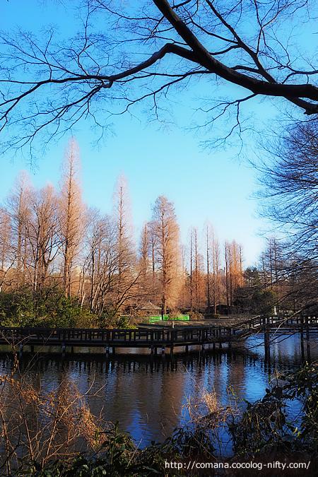 針葉樹の並木