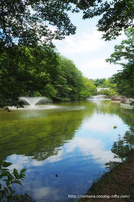 ミドリの弁天池