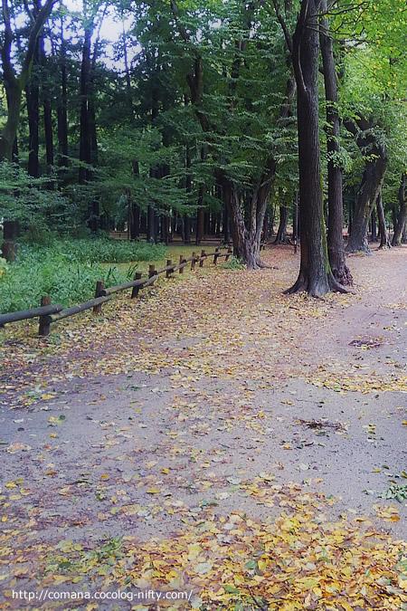 緑の葉が散る