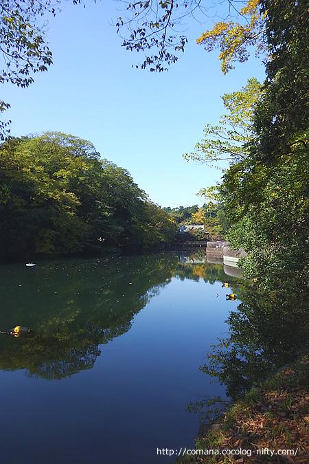 晴天の弁天池