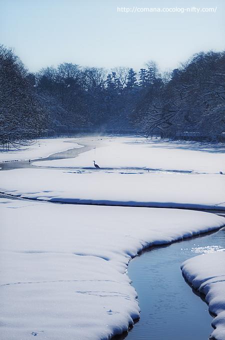 池に積もる雪