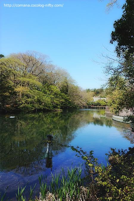 190415_inokashira_3
