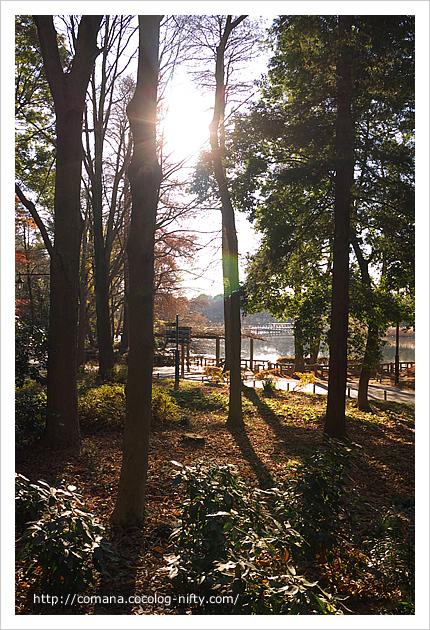 初冬の井の頭公園