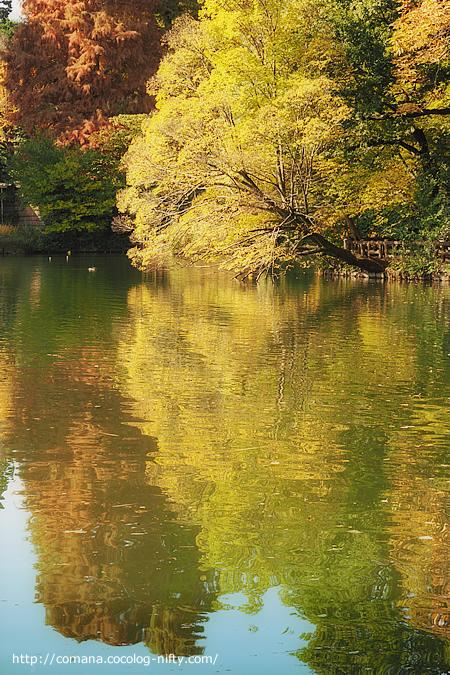 今朝の井の頭公園(紅葉)