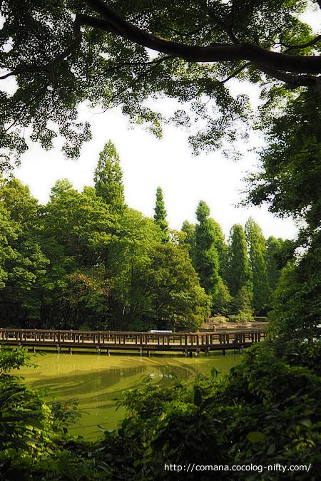 170911_inokashira