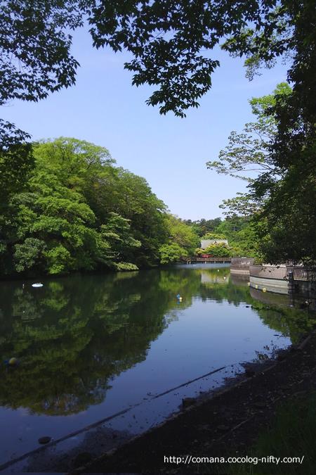 5月の井の頭公園(弁天池)
